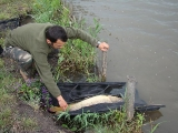 carp fishing romania_2