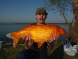 White Rock Koi_1